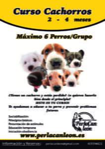 Curso Cachorros75