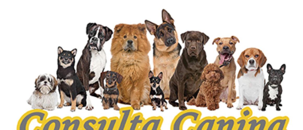 Consultas Caninas