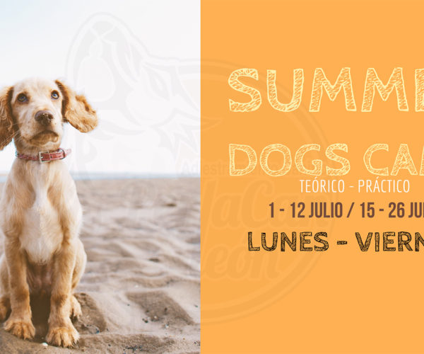 Summer Dogs Camp